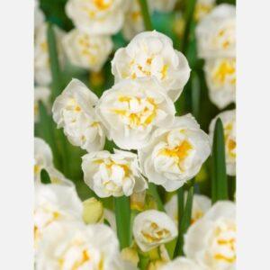 Narcis Bridal Crown